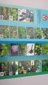 De planten uit de tuin om mee te verven2